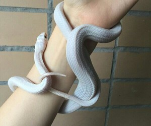 hands, snake, and white image