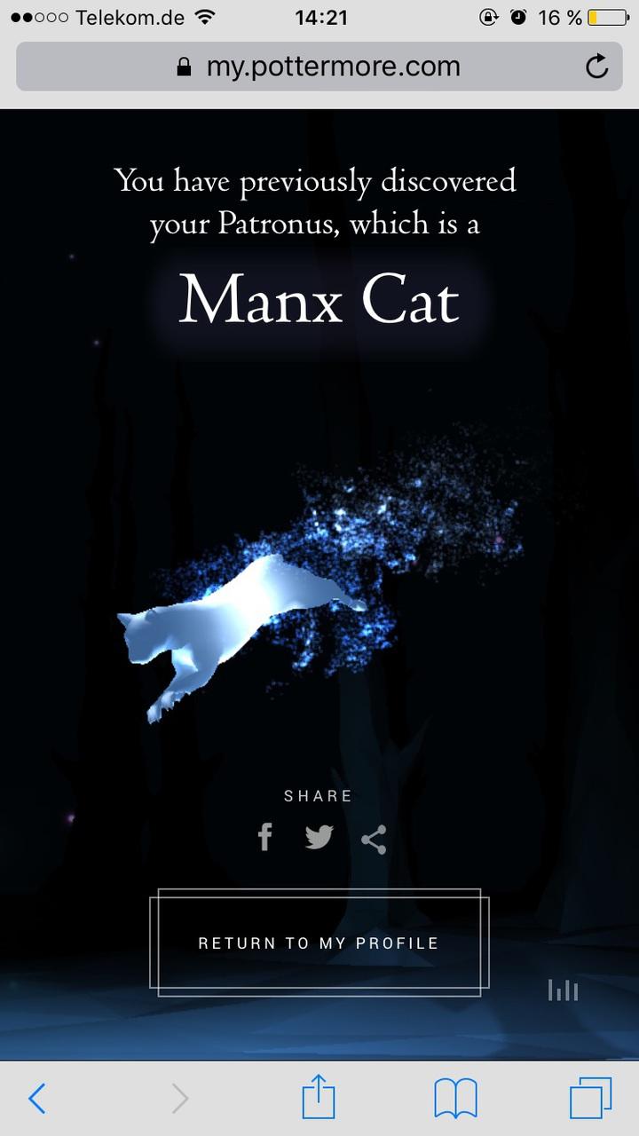harry potter, hogwarts, and manx cat image