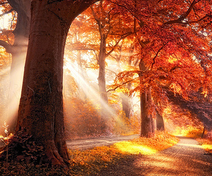 autumn, tree, and nature image