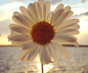 flowers, sun, and daisy image