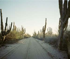 cactus, road, and photography image