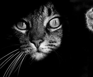 animal, black and white, and animaux image