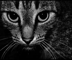 cat, eyes, and whiskers image