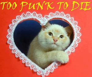 cat, punk, and heart image