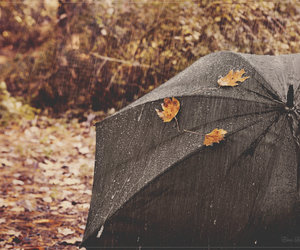 rain, autumn, and leaves image