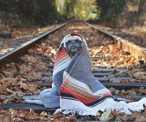 dog, pug, and autumn image