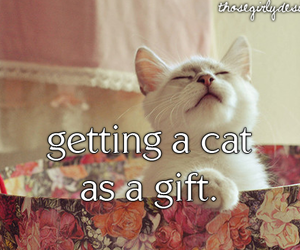 aww, cat, and gift image