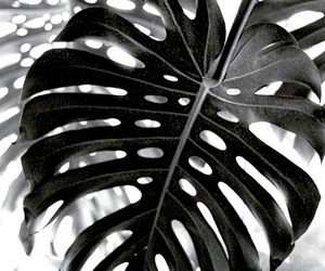 blackandwhite, photography, and leaves image