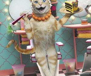 birthday, bday, and cat image
