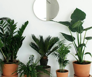 plants, green, and greenery image