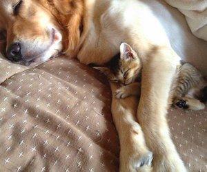 animal, dog, and kitten image
