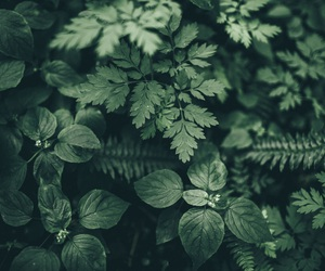 green, nature, and leaves image