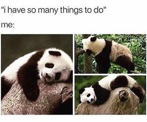 panda, funny, and me image