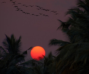 sunset, bird, and nature image