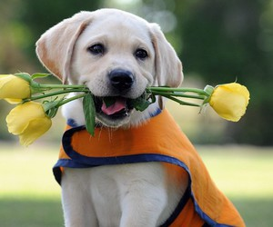 dog rose romantic cute image