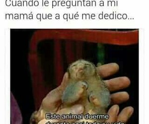 memes, me, and memes en español image