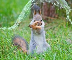 squirrel, animal, and funny image