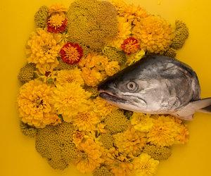 beautiful, fish, and sun image