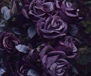 rose and purple image