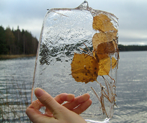 ice and leafs image