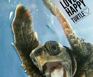 happy and turtle image