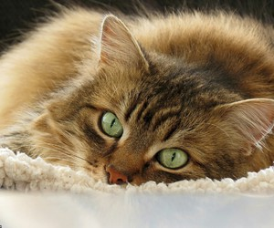 beautiful, cat, and cozy image