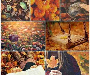 autumn, hedgehog, and october image