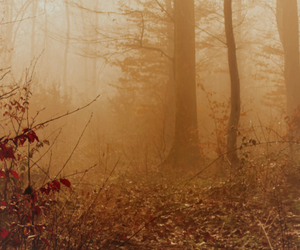 autumn, background, and header image