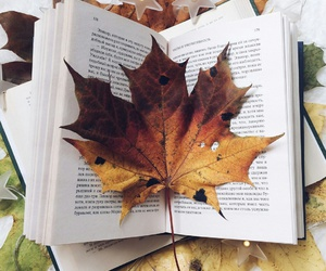 autumn, inspiration, and leaf image