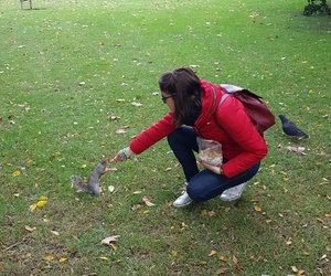 animals, london, and squirrel image