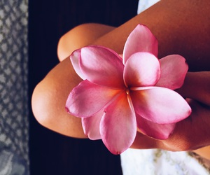flower, hawaii, and pink image
