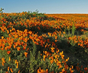 feed, green, and orange image