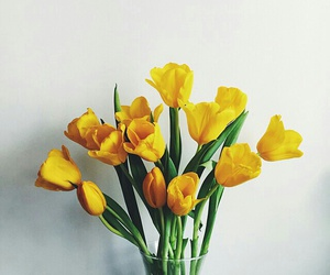 flowers, yellow, and spring image