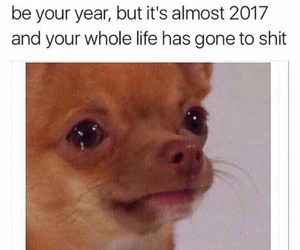 funny, 2016, and life image