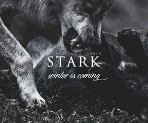 stark, game of thrones, and wolf image