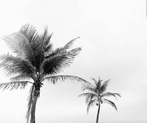aesthetic and palm trees image
