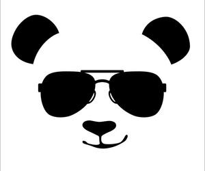 animal, hipster, and nice image
