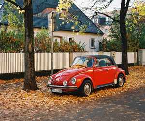 nature, vintage, and cute image