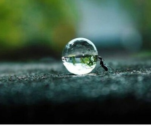 ant, water, and nature image