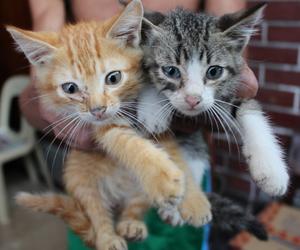 cat, heart, and kitties image