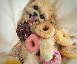 donuts, dog, and cute image