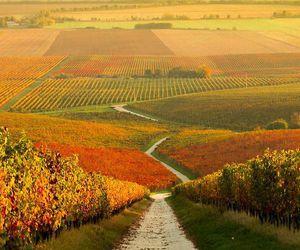 nature, autumn, and landscape image