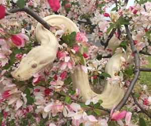 pink, snake, and flowers image