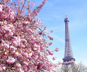 spring, flowers, and paris image