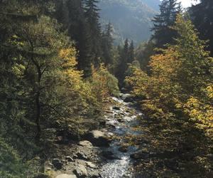 autumn, Georgia, and colorful image