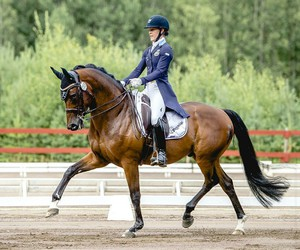 dressage, goals, and horse image