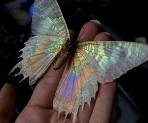 butterfly, aesthetic, and fashion image