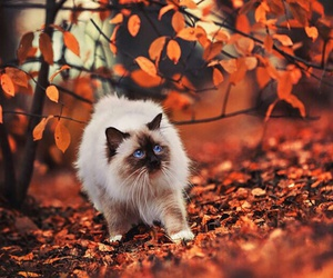 autumn, october, and cat image