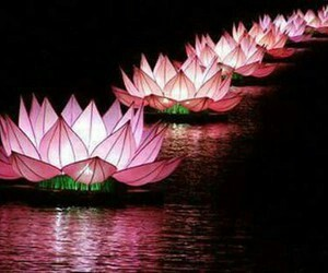 flower, lotus, and pink image