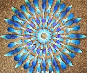 blue, danmala, and flower image